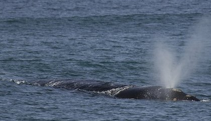 What We Can Learn from Whale Breath