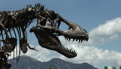 Due to the Shutdown, Arrival of the Natural History Museum's T. Rex is Postponed Until Spring