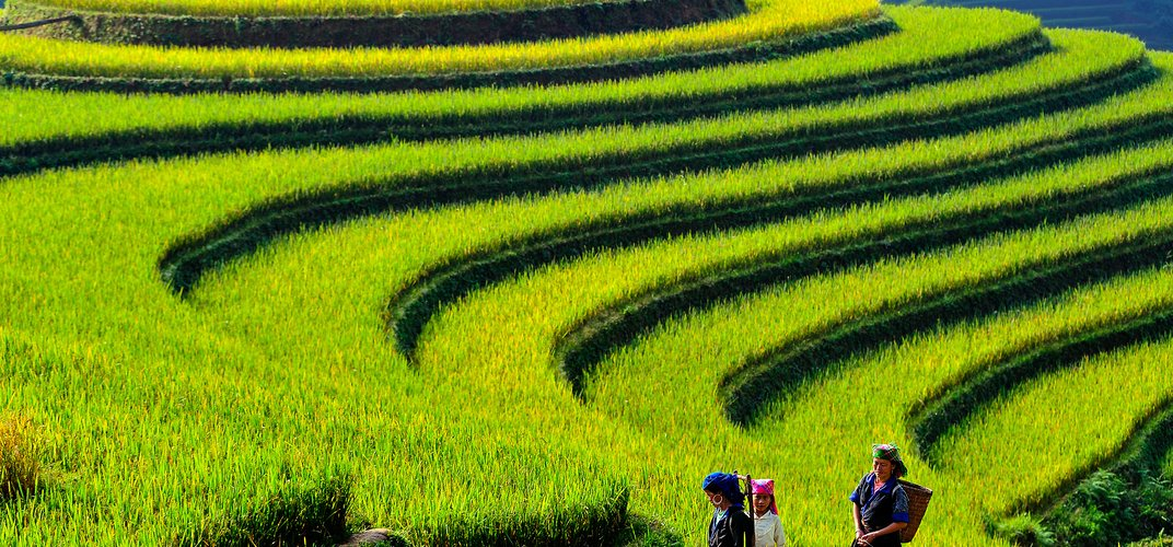 Terraced rice fields in Vietnam. Credit: Hoang Long Ly