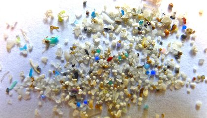 Five Things to Know About Congress' Vote to Ban Microbeads