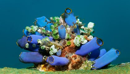 Even Ocean Creatures Struggle With Light Pollution
