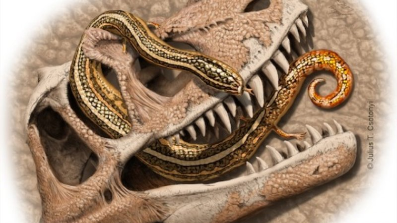 An artists' rendering of Diablophis gilmorei, one of the many small animals discovered in the Fruita Paleo Area in Colorado.