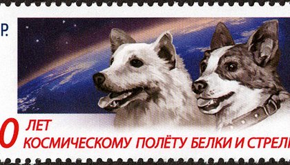 Remembering Belka and Strelka