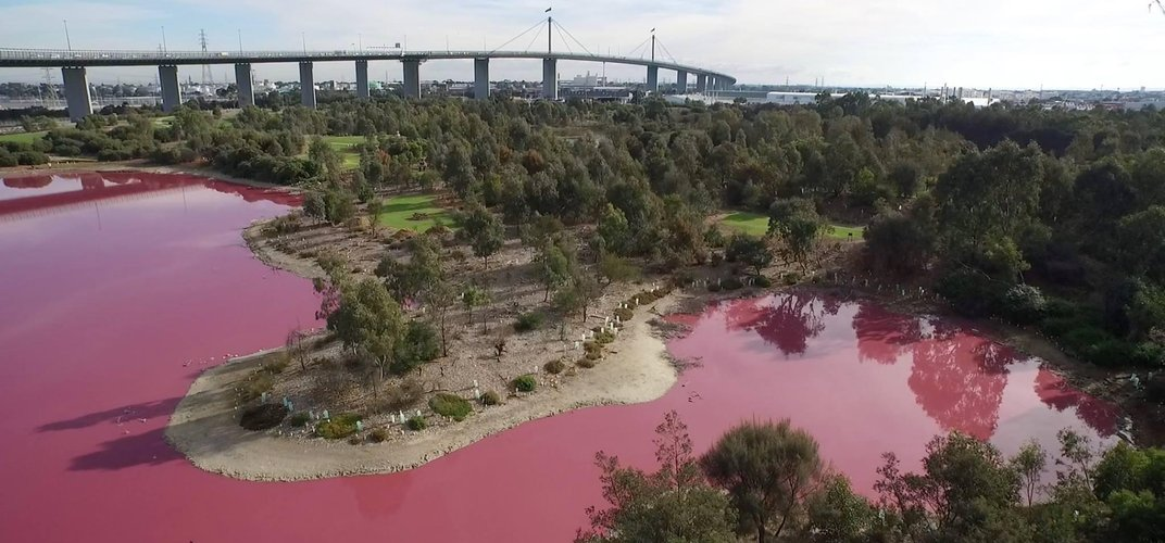 Caption: Why Did This Australian Lake Turn Bright Pink?