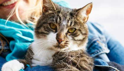 How Cats Transformed From Wild Animals to Cuddly Companions