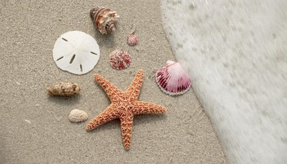 Five of the Best Beaches for Beachcombing in the U.S.