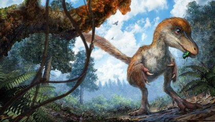 A Feathered Dinosaur From 99 Million Years Ago