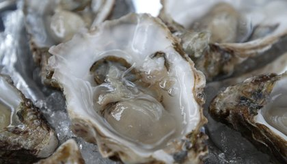 Connecticut's Trying to Stop Oyster Thieves