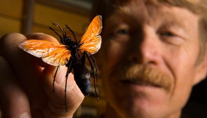 This Guy Got Himself Stung 1,000 Times For Science—Here's What He Learned