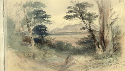 The Beautiful Drawings by Darwin's Artist-in-Residence