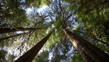 Visit the World's Most Amazing Old-Growth Forests