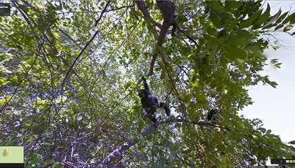 Exclusive: The Chimpanzees of Gombe National Park Make Their Street View Debut
