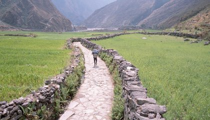 How One Crop Allowed Humans to Conquer the Himalaya