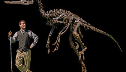 New Winged Dinosaur May Have Used Its Feathers to Pin Down Prey