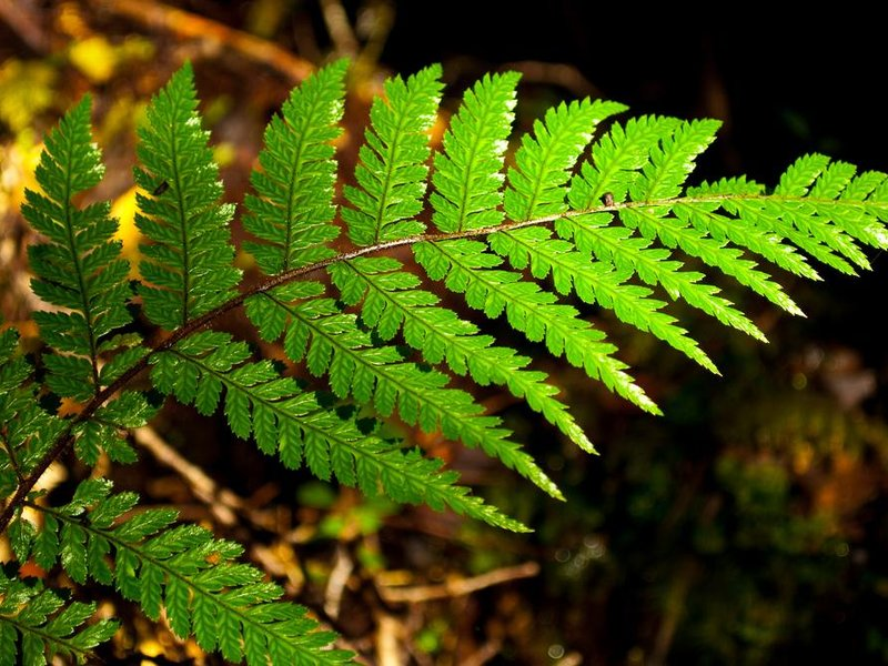 A fern repeats its pattern at various scales.