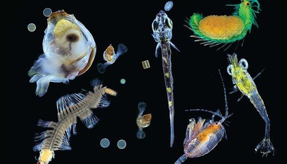 How Will Climate Change Impact Plankton?