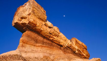 Protecting Arizona's Petrified Forest Can Be as Easy as Taking a Hike