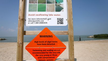 Toxic Algae Blooms in Lake Erie Could Become the New Normal