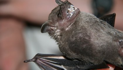 A Night in the Forest Capturing Bats