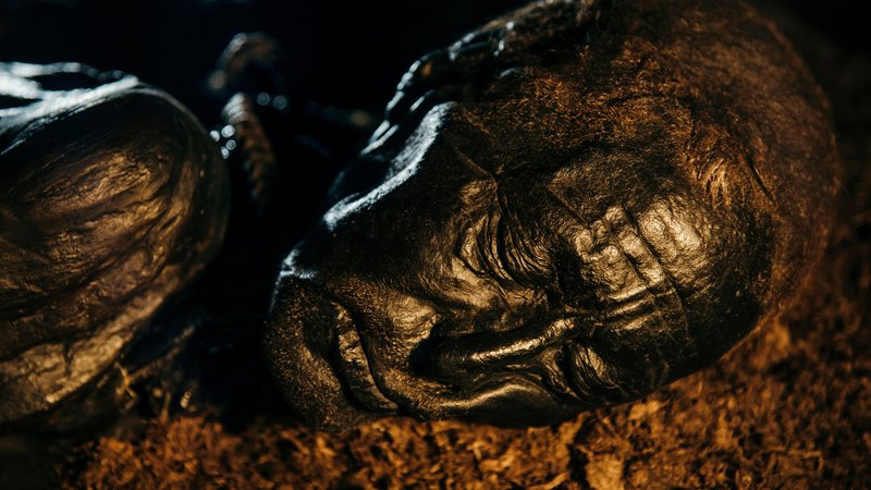 Tollund Man, discovered in a bog in 1950 near Silkeborg, Denmark, initially was thought to be the victim of a recent murder.