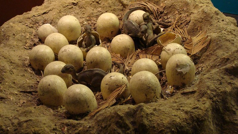 A reproduction Maiasaura nest. Dino nests like these would have, over time, transformed flat floodplains into bumpy landscapes.
