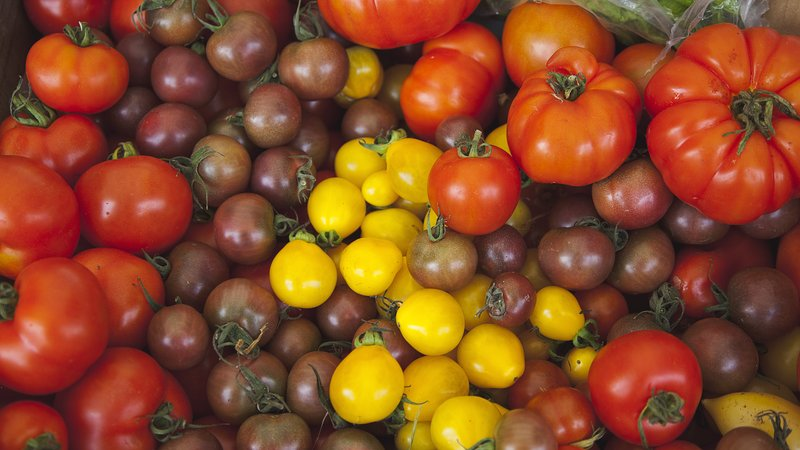 Variety of tomatoes at the farmers market.