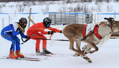 "In Northern Norway, Reindeer Racing and a ""Joik"" Singing Showdown Welcome in Spring"