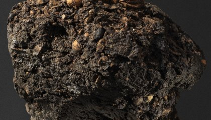 Researchers Trace 300-Year-Old Lump of Poop to Danish Bishop