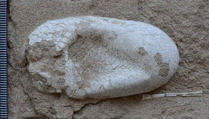 Found: 120-Million-Year-Old Colony of Fossilized Flying Reptiles, Plus Their Eggs