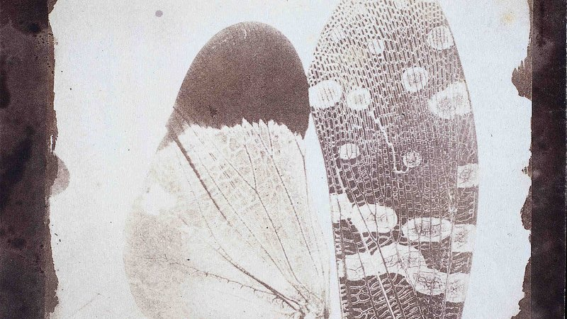 Amateur scientist and photography pioneer, William Henry Fox Talbot (1800-1877) took this photomicrograph image of insect wings under a microscope.