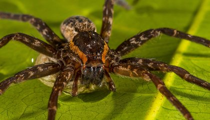 Recently Discovered Spider Is Named After Physicist Brian Greene