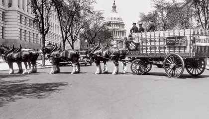 The Budweiser Clydesdales' First Gig Was the End of Prohibition