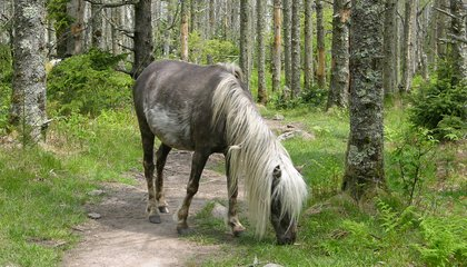 The Only Place on the Appalachian Trail Where You Can See Wild Ponies
