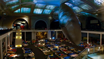 Slumber With Skeletons at This New York Museum