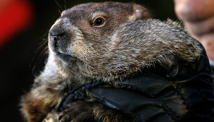 A Short History of Groundhog Day