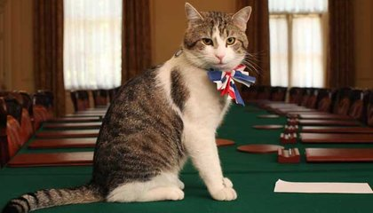 "10 Downing Street's ""Chief Mouser"" Is Keeping His Job Despite Brexit"