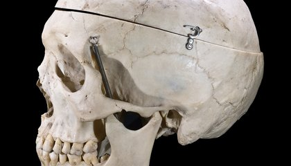 A Chin-Stroking Mystery: Why Are Humans the Only Animals With Chins?