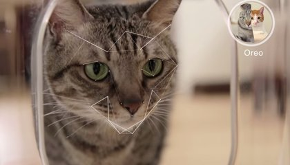 This Smart Cat Feeder Uses Facial Recognition to Exclude Greedy Kitties
