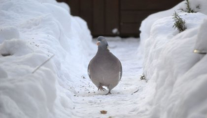 This Winter Was Hard on Animals, Too