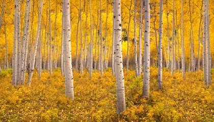 Where to Hike to (and Through) the World's Largest Organisms