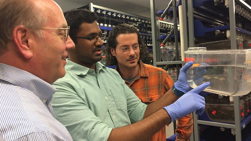 L to R: James Patton, Mahesh Rao and Dominic Didiano in the zebrafish lab (The Patton Lab/Vanderbilt)