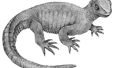 This Ancient Creature Shows How the Turtle Got Its Shell