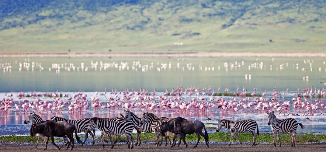 Wildlife at Ngorongoro Crater