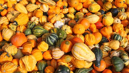 Beyond the Butternut: A Guide to Selecting a Great Winter Squash