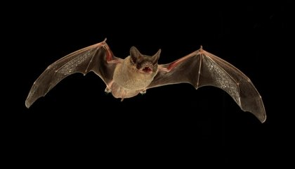 On Summer Nights, Some Bats Like to Jam