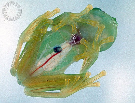 14 Fun Facts About Frogs | Science | Smithsonian
