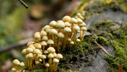 Death By Fungus, and Other Fun Facts About Fungal Friends and Foes