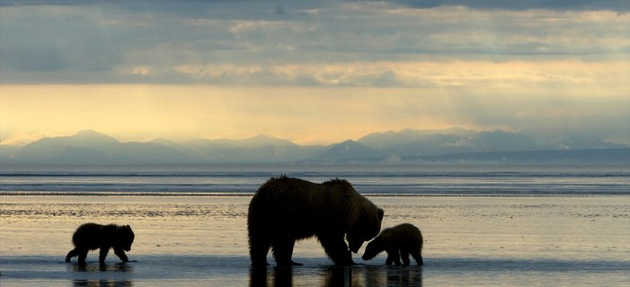 Exploring Alaska's Coastal Wilderness <p>Experience&nbsp;Alaska&#39;s iconic scenery and wildlife as you kayak along its coastlines, listen to calving glaciers, and spend a day in Glacier Bay National Park&nbsp;aboard our small ship.</p>