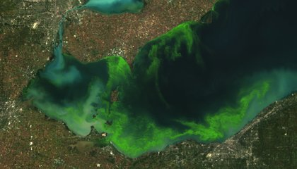 1970s Redux: Lake Erie Is So Polluted, Toledo's Drinking Water Was Cut Off