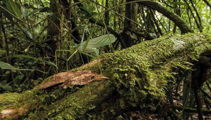 A New Age of Discovery Is Happening Right Now in the Remote Forests of Suriname